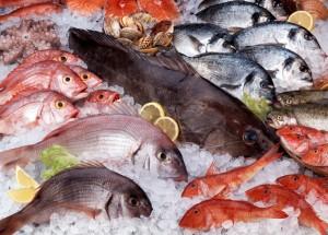 pescadodresco